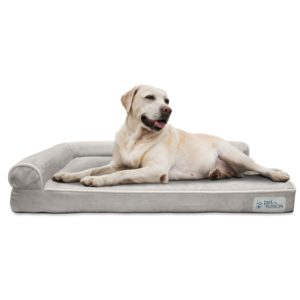 PetFusion BetterLounge Dog Bed for a Vizsla